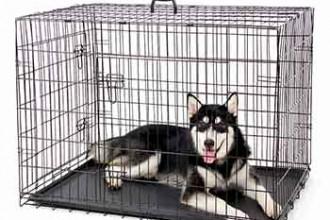 gabbia per cani